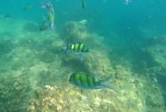 snorkeling Phi Phi Island 2