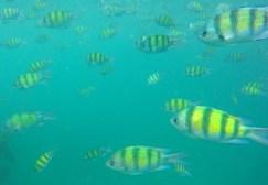 snorkeling Phi Phi Island 3