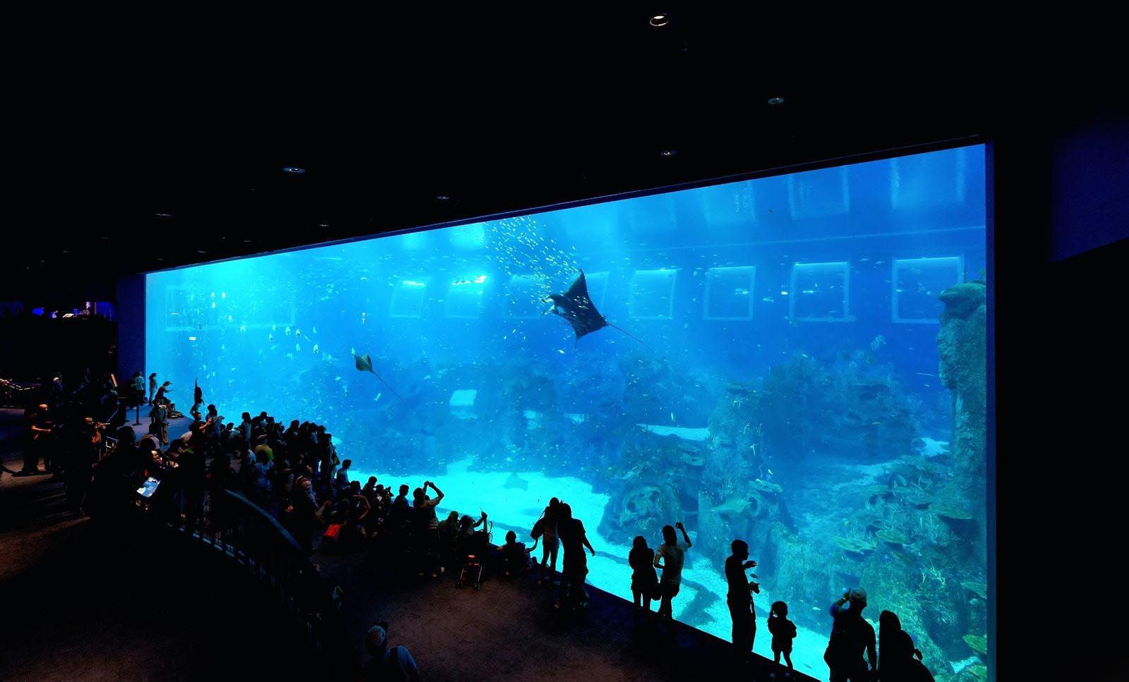 新加坡自由行攻略行程:新加坡聖陶沙島 - 新加坡海底世界,參觀亞州最大的熱帶水族館 - Travelliker 愛遊人