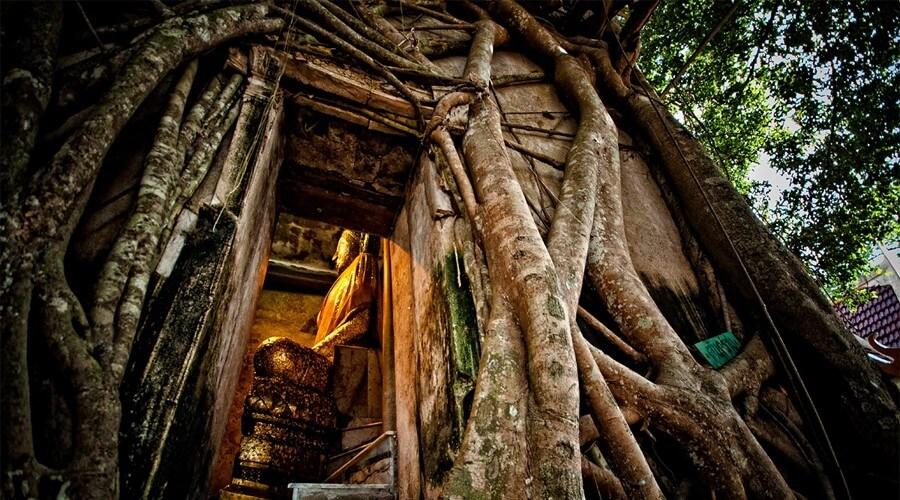 【泰國必去】樹中廟 十大最靈驗寺廟之一 - Travelliker 愛遊人