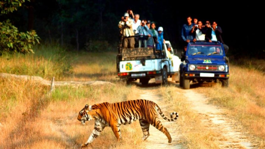 India, Bargain Flights, Bargain Flights From London, Blog, Cheap Flights, Cheap Flights From London, cheap flights from united kingdom, cheap flights to Jaipur India, cheap tickets, cheap travel, direct flights, direct flights to Jaipur India, Emirates Airline, flights, Flights Booking, Flights From London, Flights From United Kingdom, Kenya Airways, last minute flights, last minute flights to Jaipur India, Jaipur food, Qatar Airways, special offers, travel, Traveling, Turkish Airlines, United Kingdom, Jaipur, Jaipur cuisine, Jaipur food, Jaipur Travel Guide, Jaipur Blog, Jaipur blog, Jaipur tourism, Jaipur travel blog, Jaipur tour, Jaipur tourism places, Wildlife, wildlife parks, best wildlife parks in asia, wildlife parks in india, safari, safaris, top safaris in asia, asia safari tourism, safari india, to safari in india, must visit safari india,