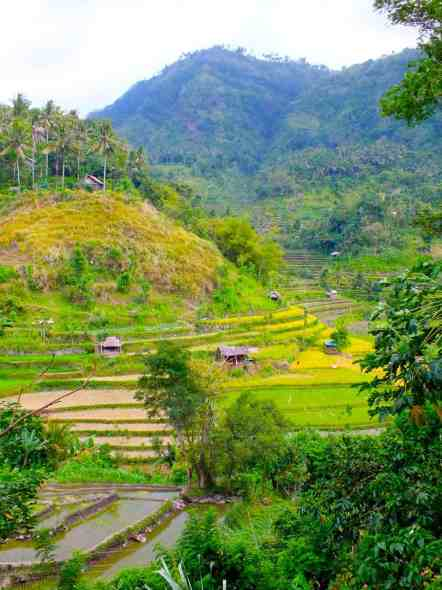 Rice Terraces on our drive from Tulamben