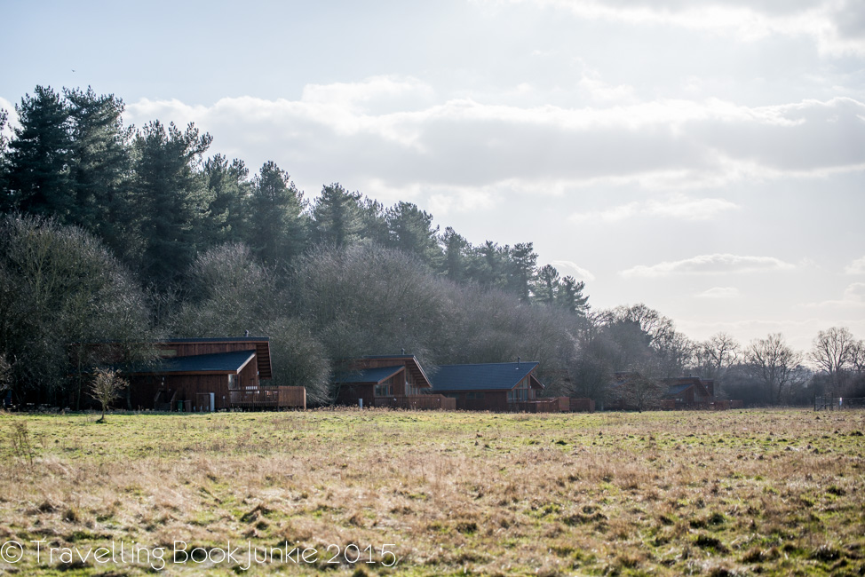Logs in the meadow at thorpe forest forest holidays norfolk uk