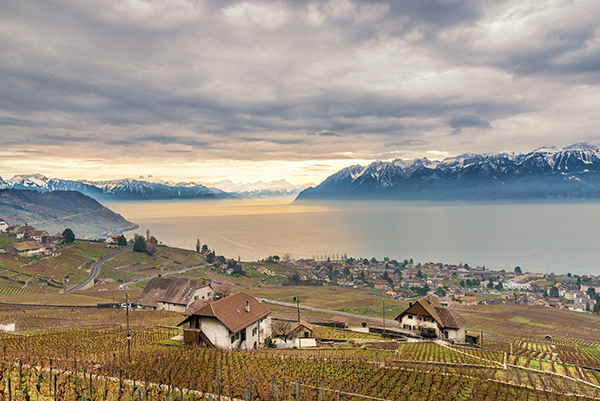 Vineyards, UNESCO, lake Leman, Lake Geneva, Lausane, Lavaux, Switzerland