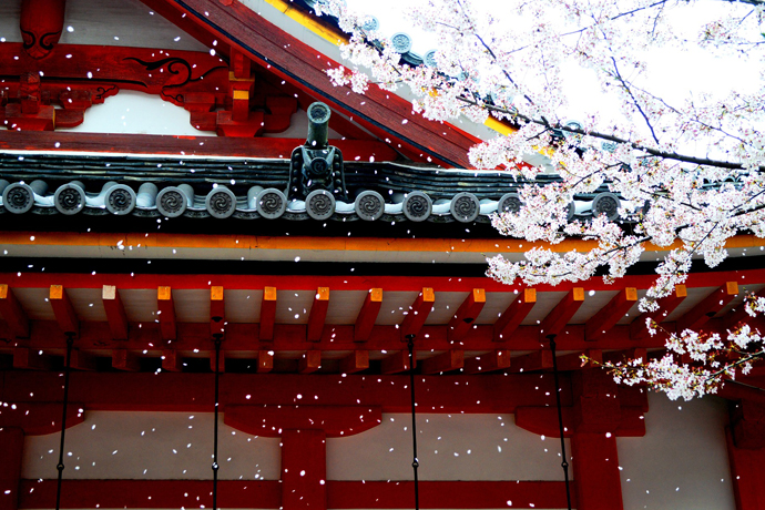 Japan, Tokyo, Cherry Blossom, Travelling, Travel, Asia, Travelling Book Junkie