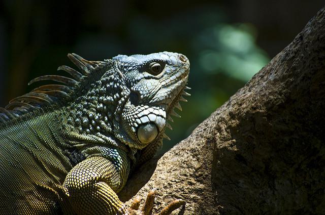 Reptiles, Ubud, Bali, Indonesia, Travel, Travelling Book Junkie