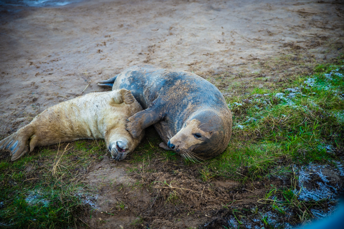 seals, best western, kenwick park, spa, hotel, spa seekers, lincolnshire, sanctuary, breeding, travellingbookjunkie, relaxing, refreshing, breaks, weekend, lodge, stay, accommodation, hotel, mid range,