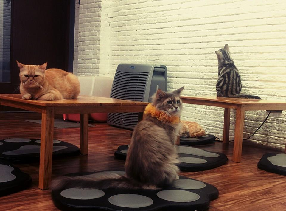 Chiang Rai, Cat Cafe, food, Thailand, temple, South East Asia