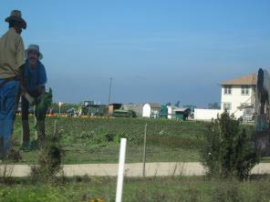 Giant figures in the fields