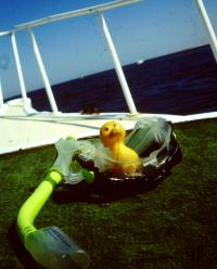 Luck Duck Sheila in Egypt 1995 at the Thomas Reef by Sharm el Sheikh
