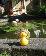 Luck Duck Sheila in Indonesia Java 2013