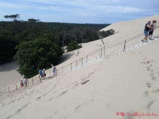 Árboles medio engullidos por la duna