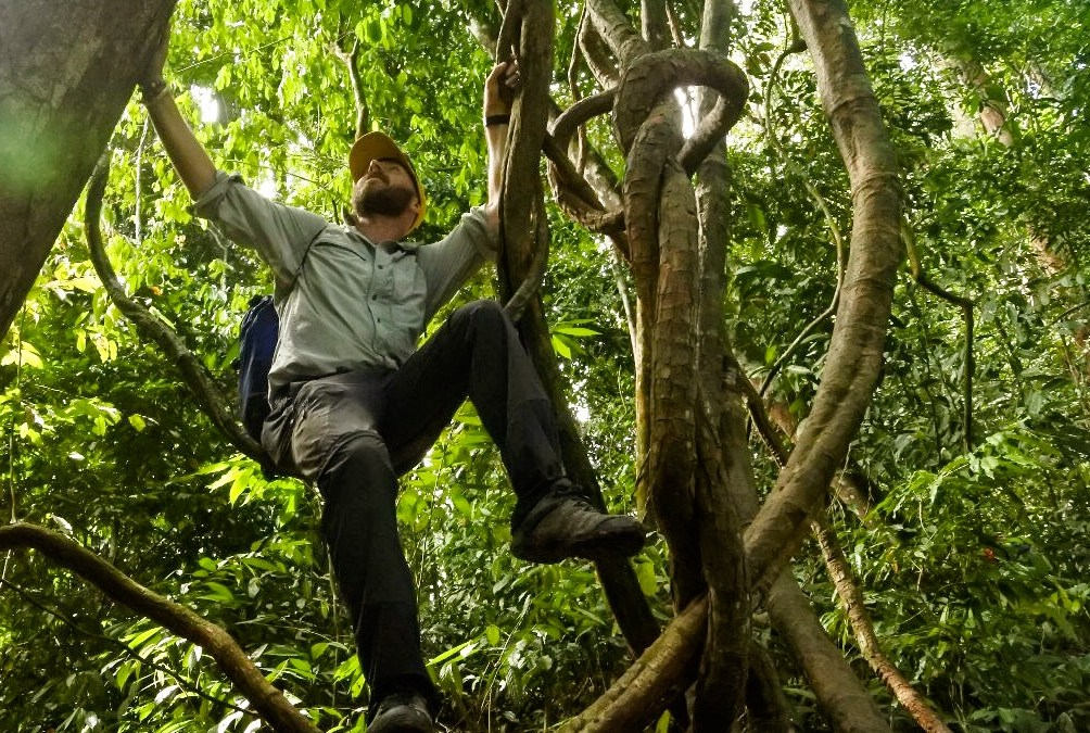 Climbing the trees in the Sumatra jungle