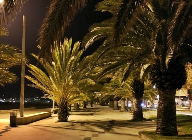 The palm-tree lined beachfront walkway