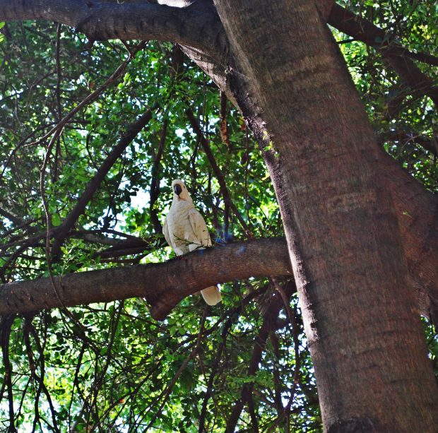 Look out for birds in the gardens - including cockatoos