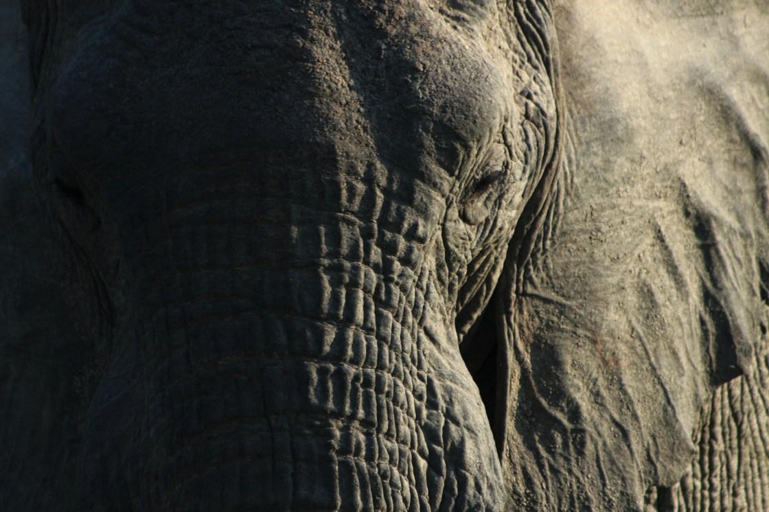 Africa conservation adventure images elephant travellivelearn.com