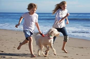 02 dog and kids