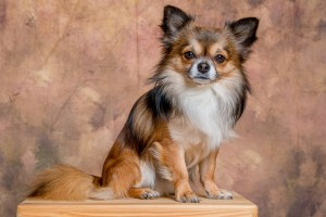Dog hotels and animal welfare
