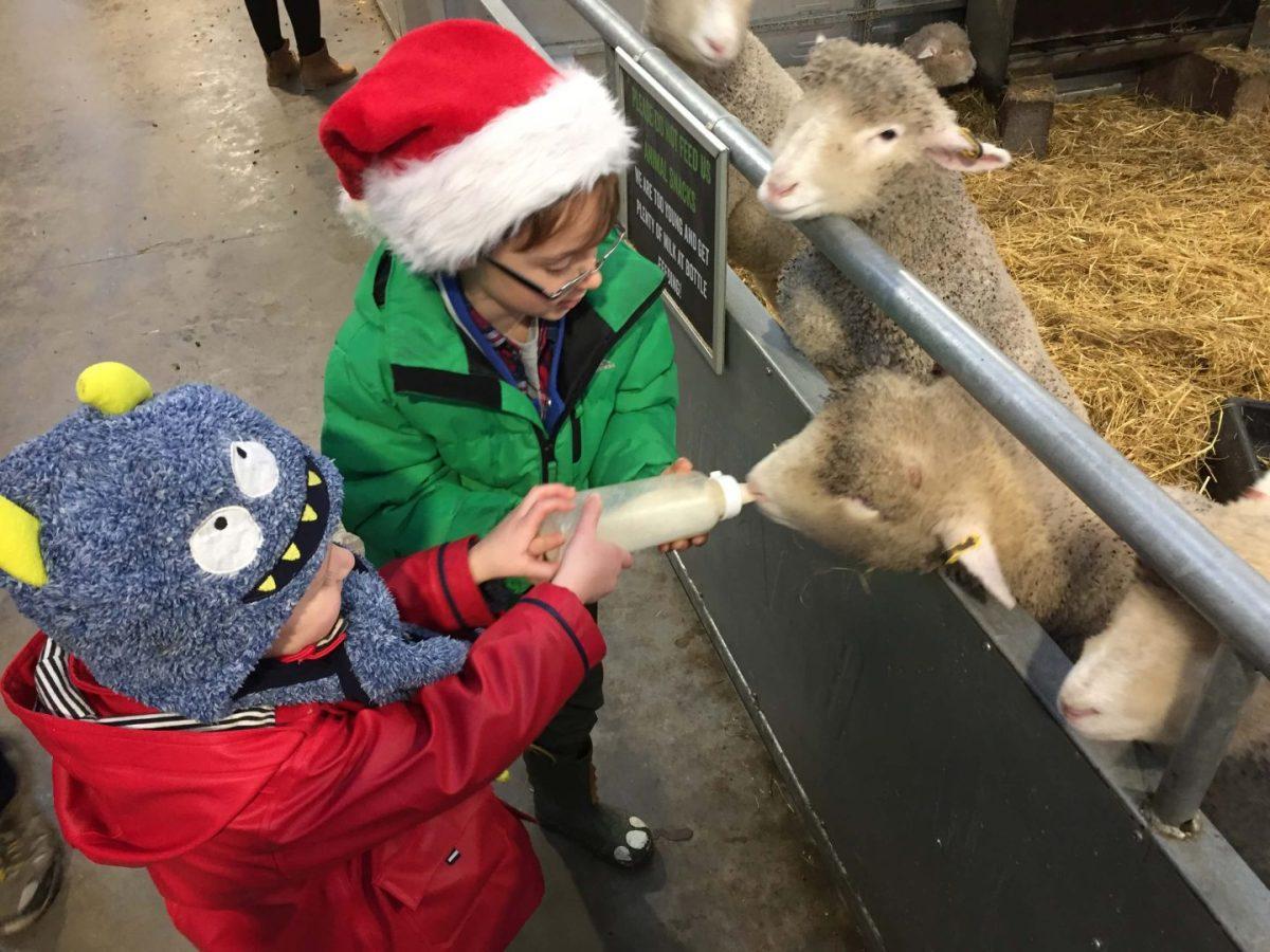 Santa at Cotswold Farm Park