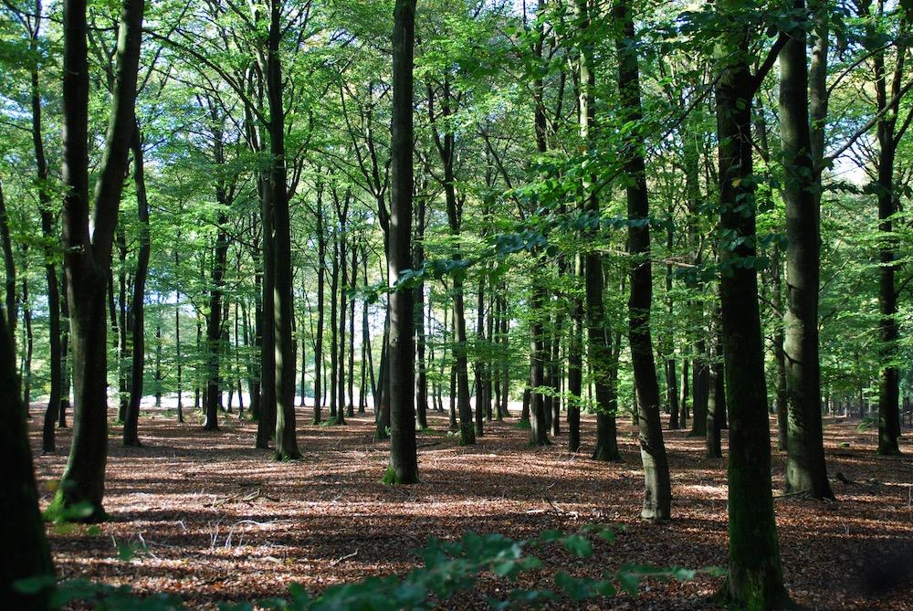 Nationaal Park De Hoge Veluwe Nederland