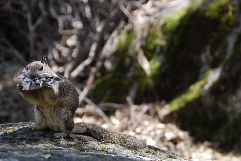 Yosemite National Park Verenigde Staten
