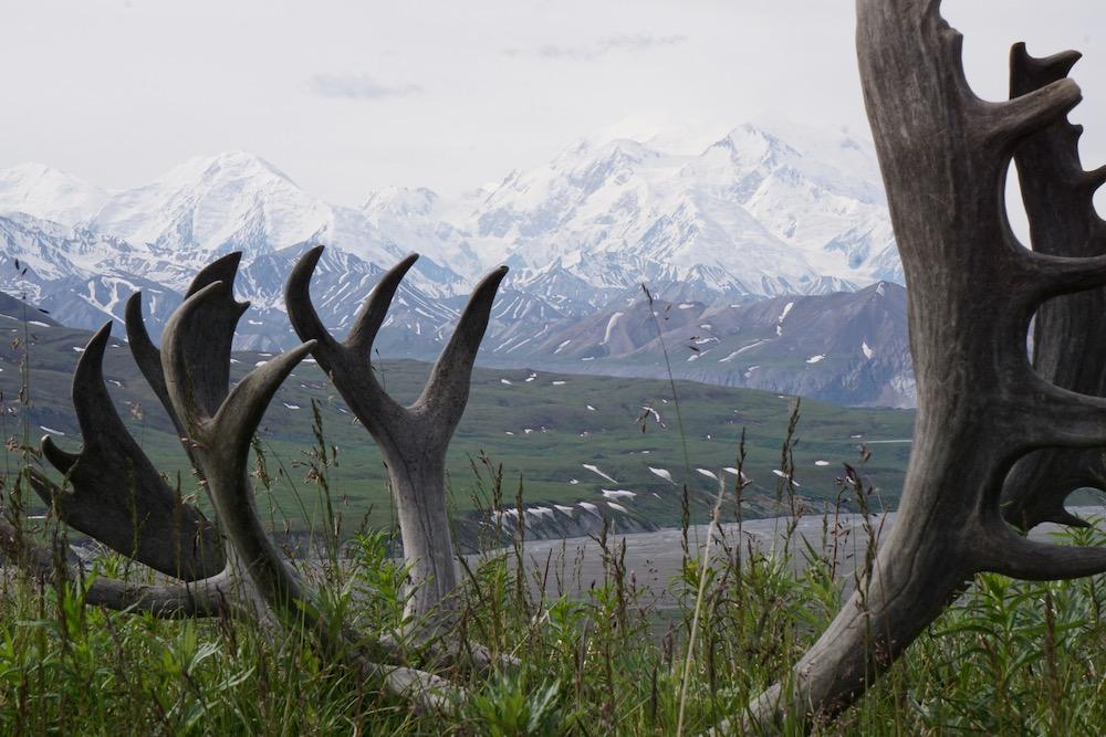 Mount Denali Denali National Park Alaska Verenigde Staten
