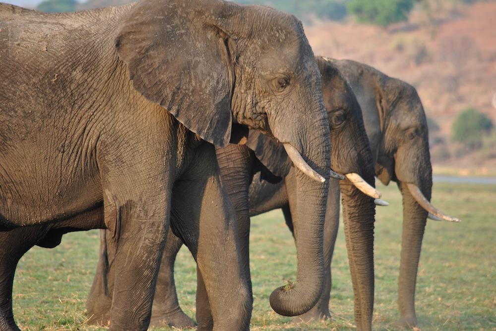 De mooiste nationale parken ter wereld Chobe National Park Botswana