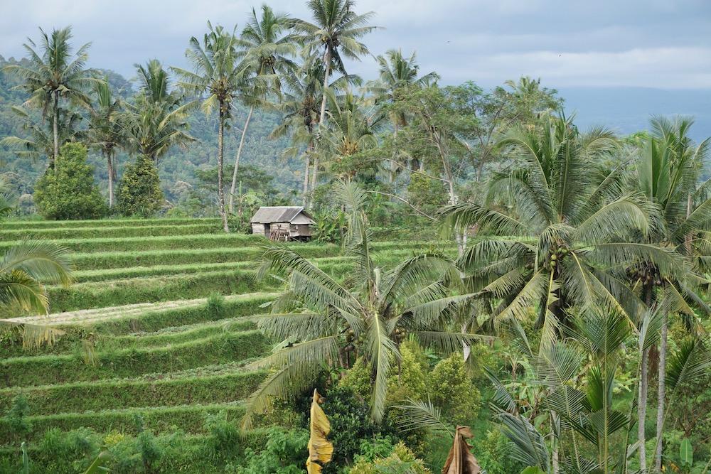 Rijstvelden Sidemen Bali Indonesië