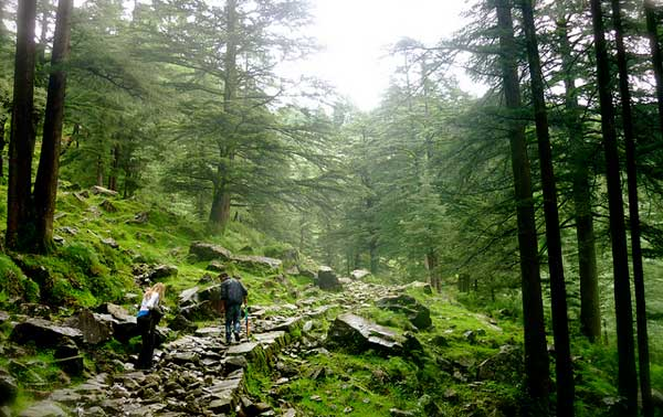 Himachal Tour Package 5 Nights 6 Days 136