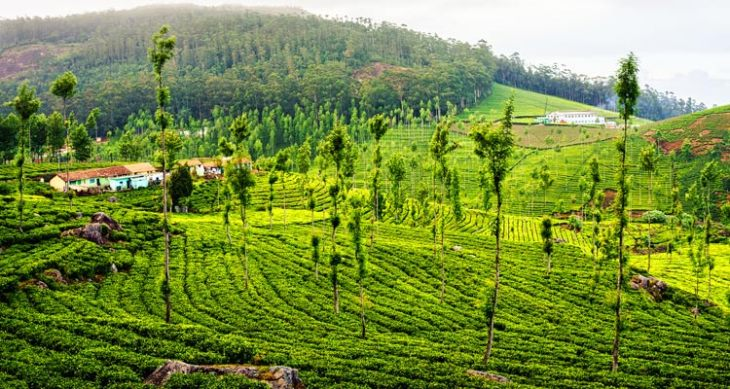 Mysore Ooty Wayanad 7 Nights / 8 Days Tour Package 49
