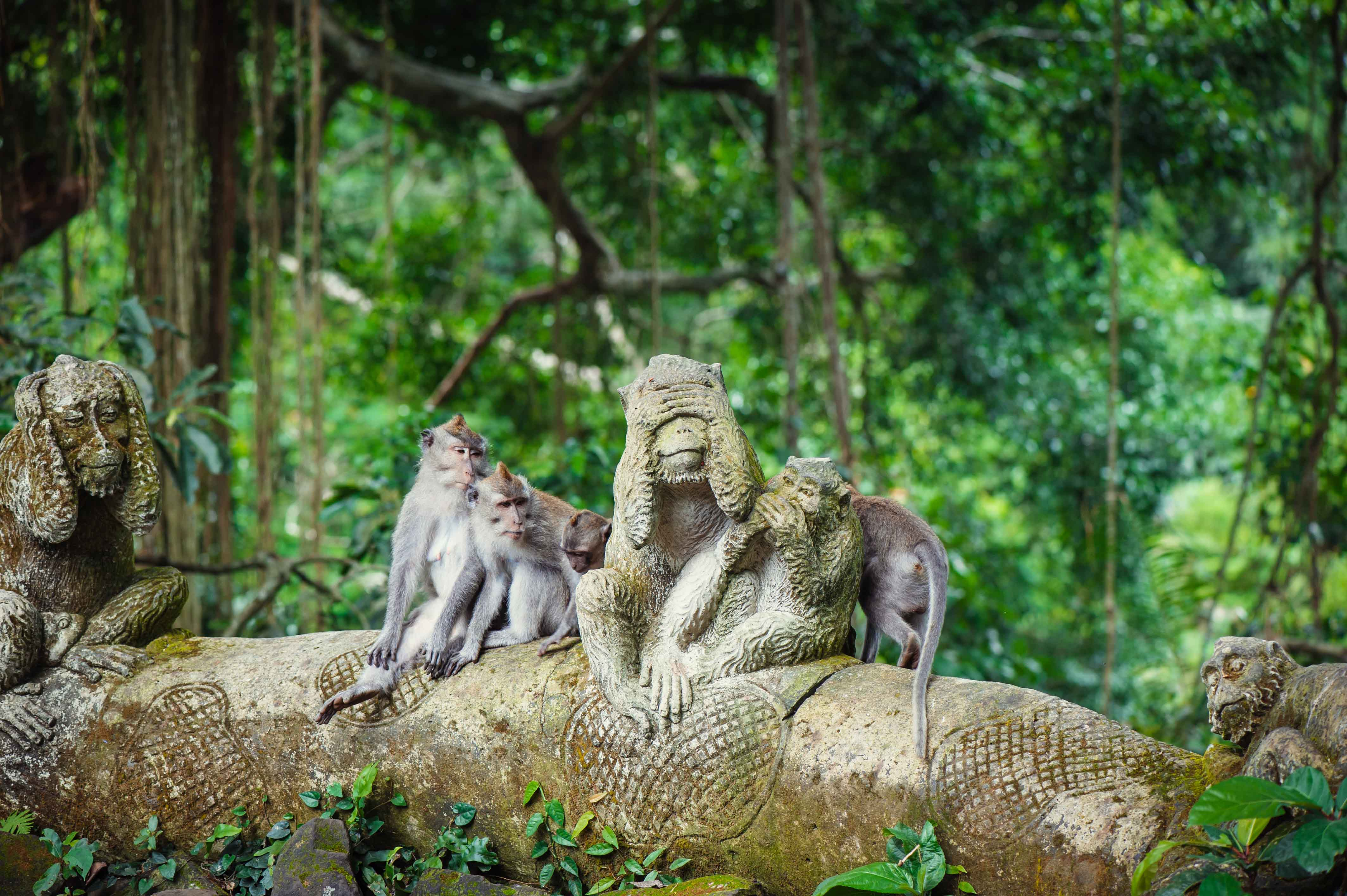 THE BEST NATURE & WILDLIFE TRIPS IN BALI
