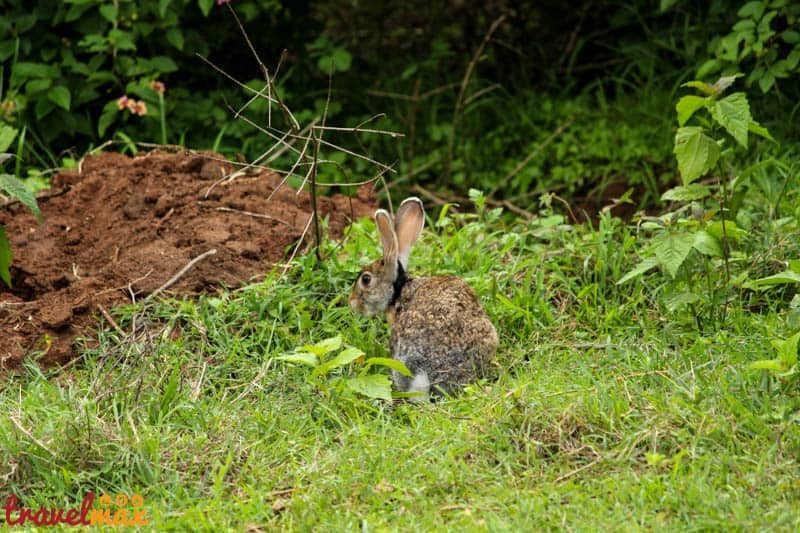 We also saw a cute little brown hare hopping around in the bushes.