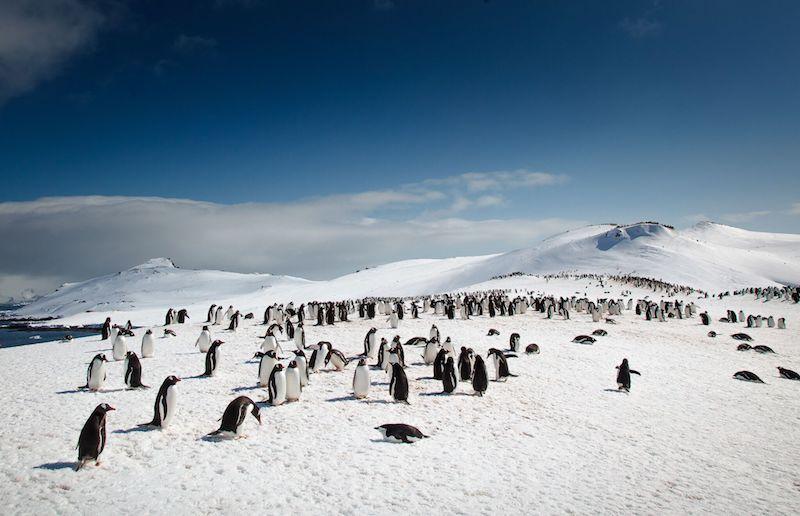 Antarctic Peninsula Image: David Merron