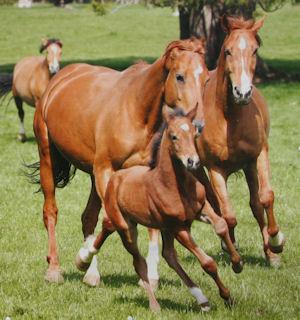 Horse in Jura