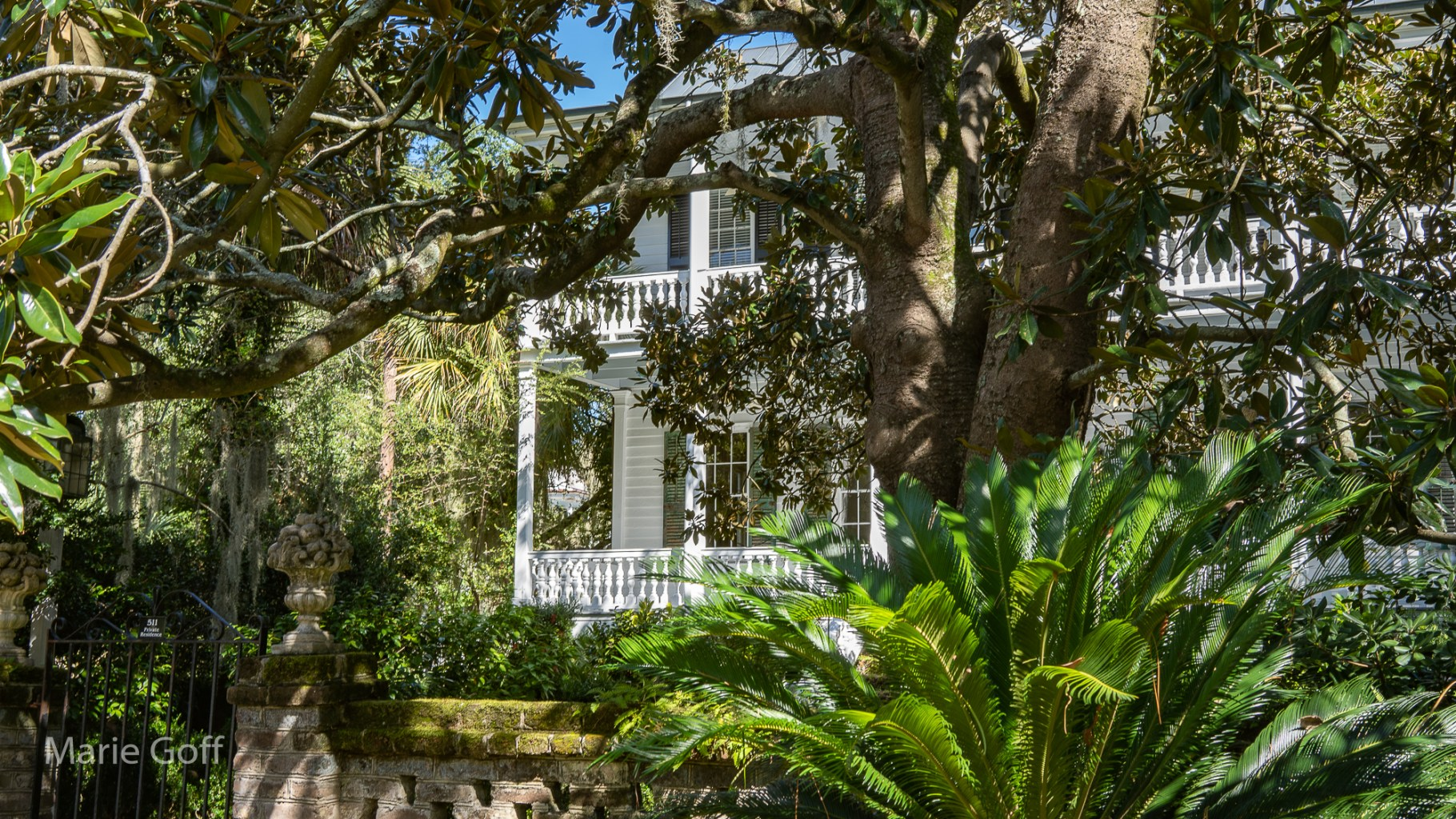 lowcountry photography