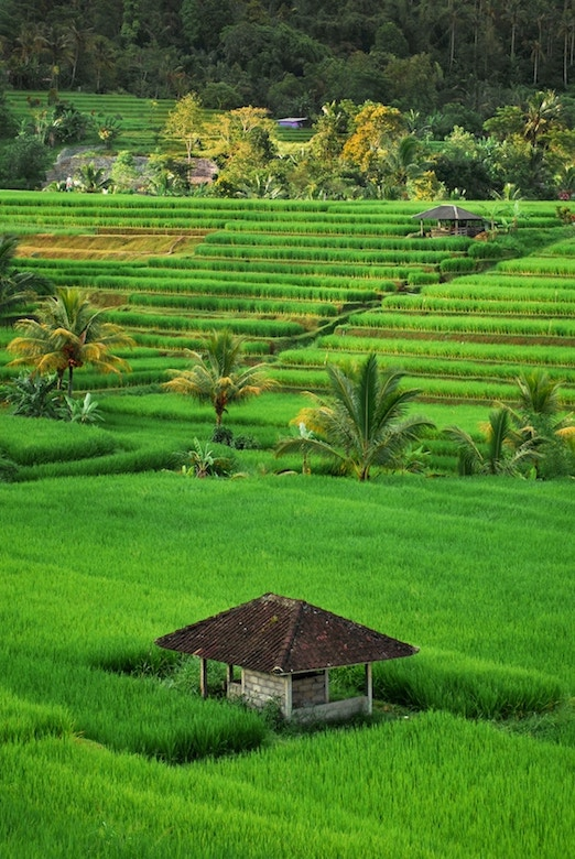 Different cities in Bali - ultimate bali travel guide