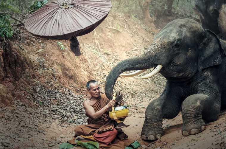 stop elephant rides find an ethical elephant sanctuary
