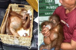 Russian Busted Smuggling Monkey Out of Indonesia