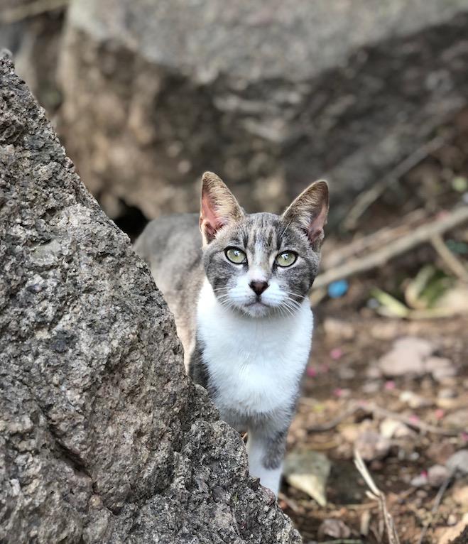 cats on el faro hike