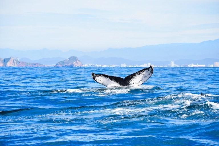 go whale watching on cruise port day in mazatlan