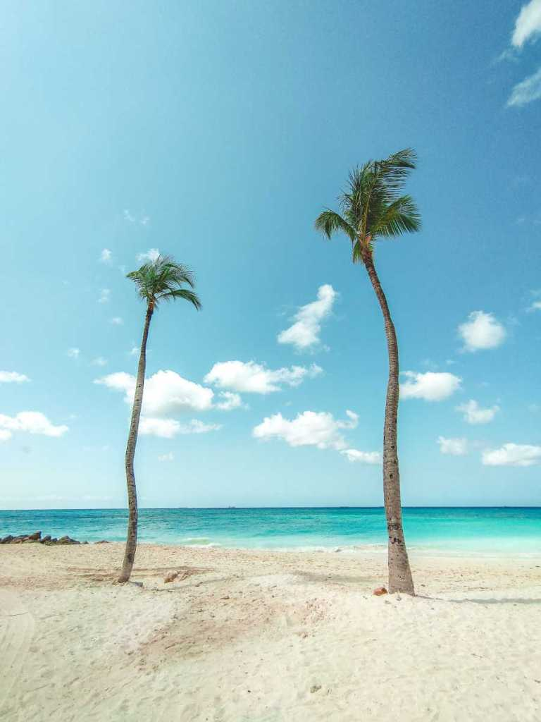 aruba beach with palm trees