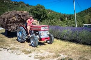 provence-OTBP-lavender-3