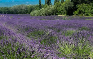 walking-in-provence-10