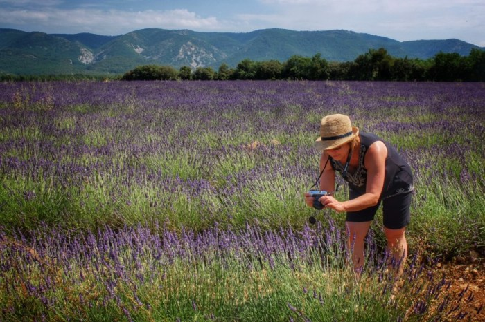 Top 2018 Tour Dates Provence Lavender Season
