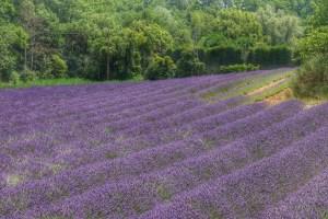 provence-lavender-2016-trip