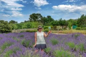 provence-lavender-2016-vangogh