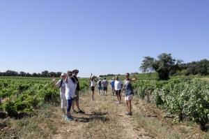 provence-june-wine-4