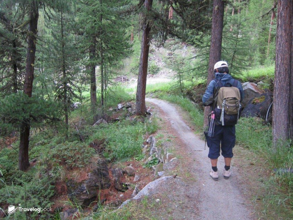 (6:42pm)走在林中,不時要看GPS,以免走錯方向。