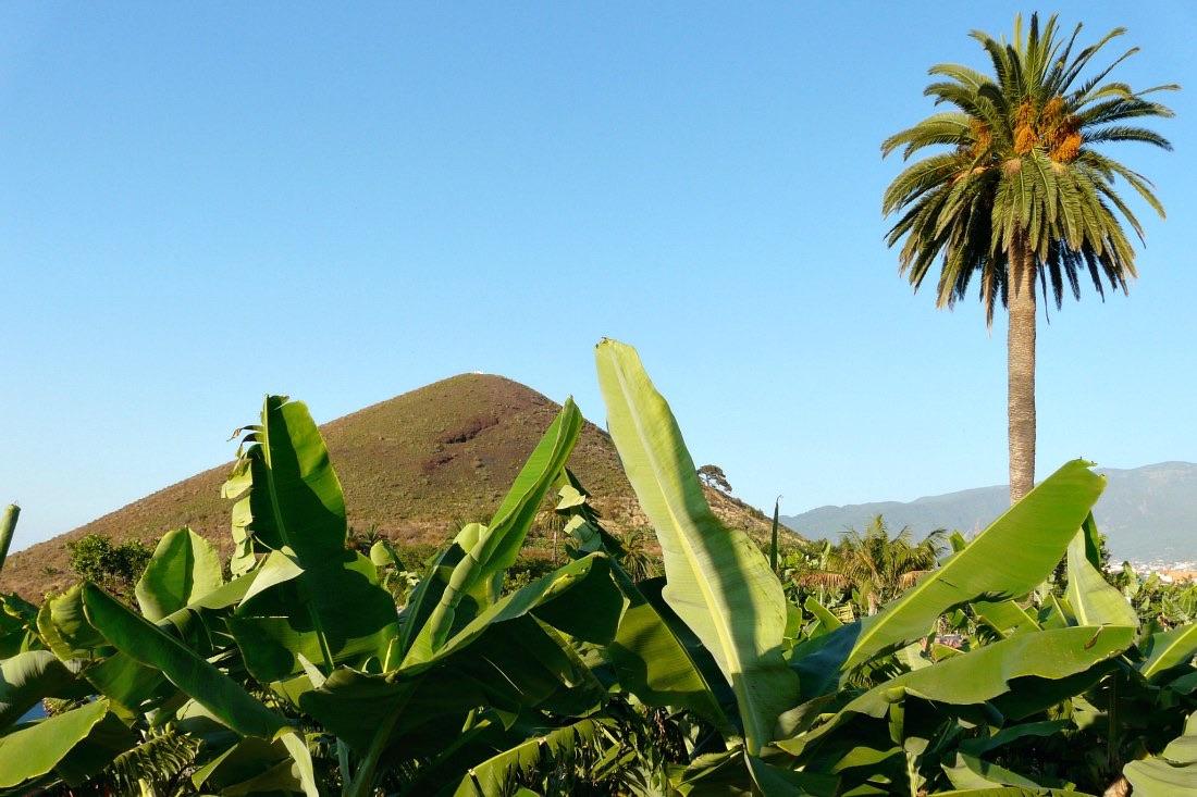 7 Tenerife-tips voor uw vakantie