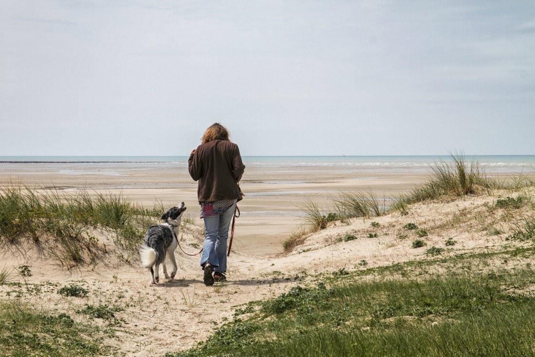 Hondenvakantie in Normandië, Frankrijk